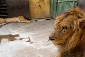 Zoos of Neglect