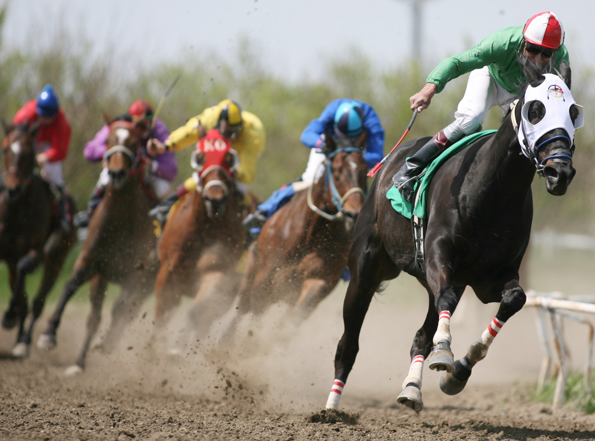 Racing Horse Bets Each Way